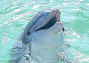Dolphins at Mundomar