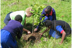 The benefits of tree planting